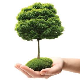 ranpak-tree
